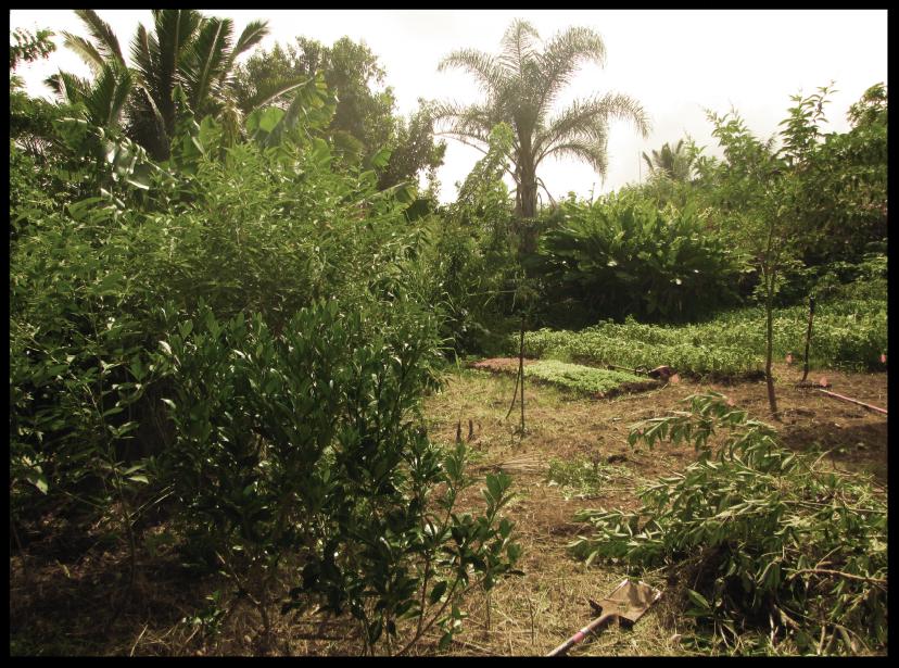 mana+garden+process+images+far+left.png