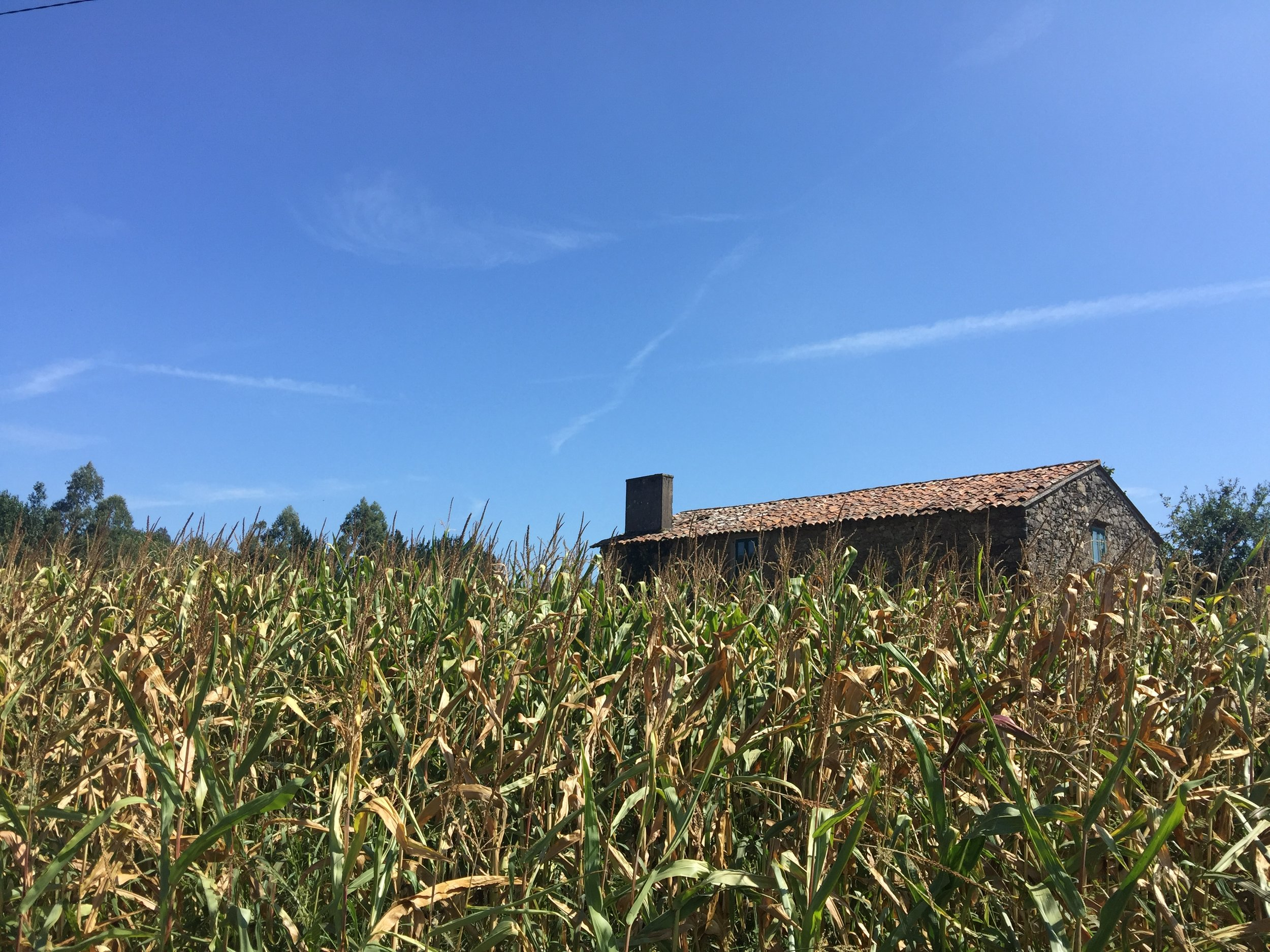 There's a lot of corn in Galicia.