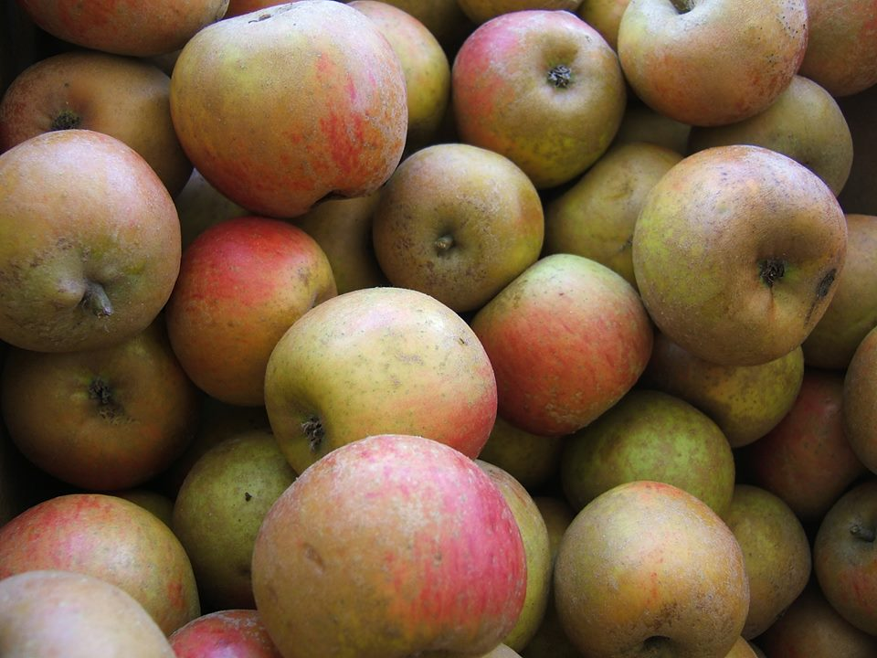 Apples A-Z — Devoto Gardens & Orchards