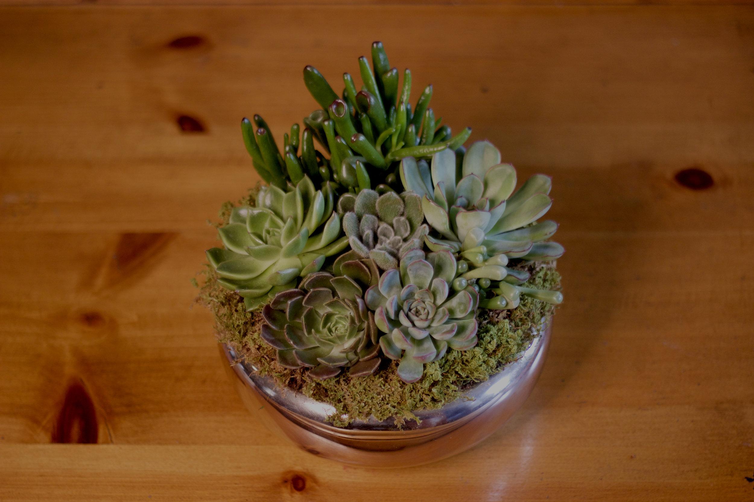 Philosophie Floral Succulent Bowl