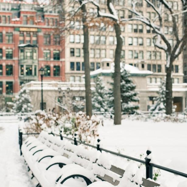 Snow Tips 1.jpg