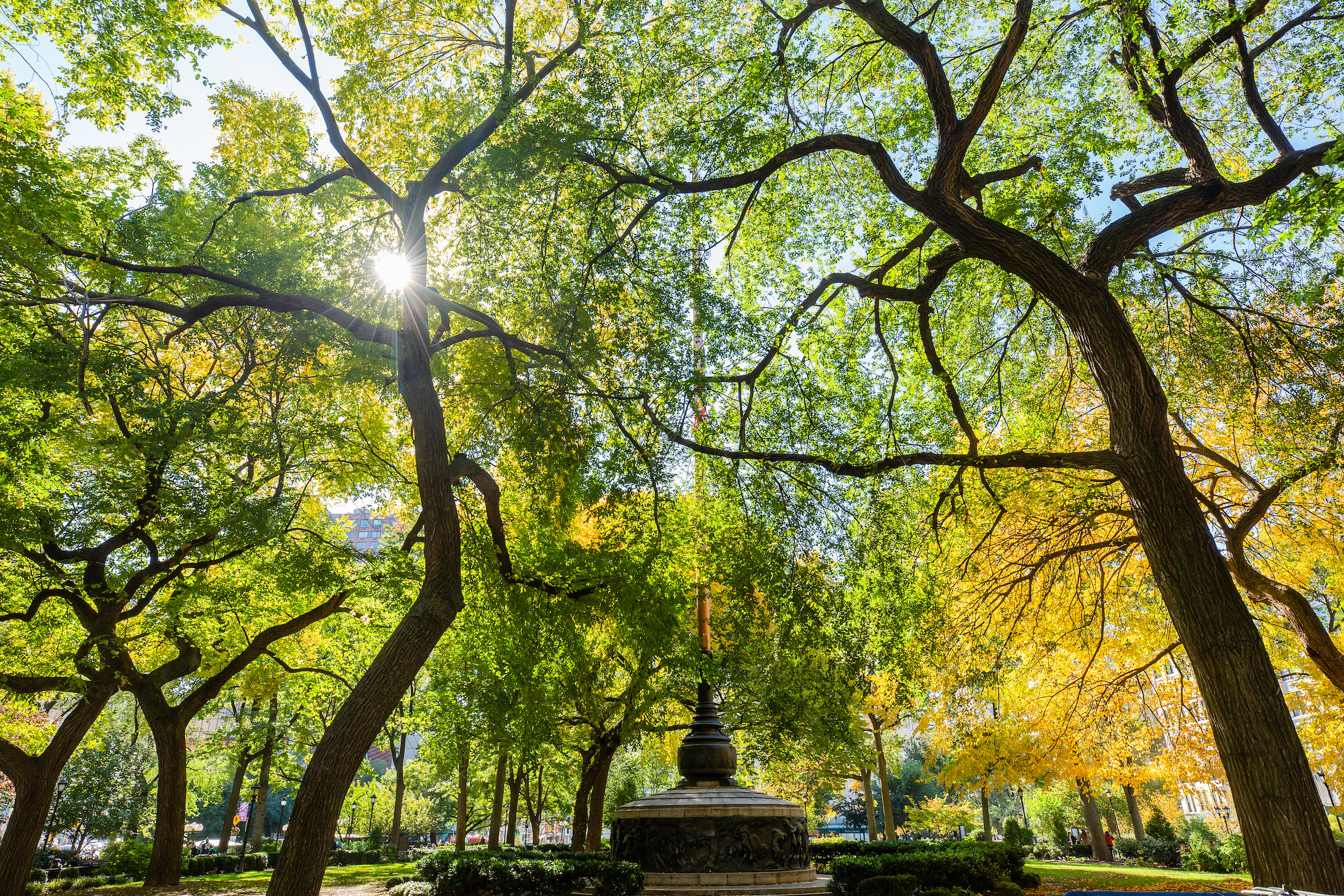 0486_UnionSquareFallFoliage.jpg