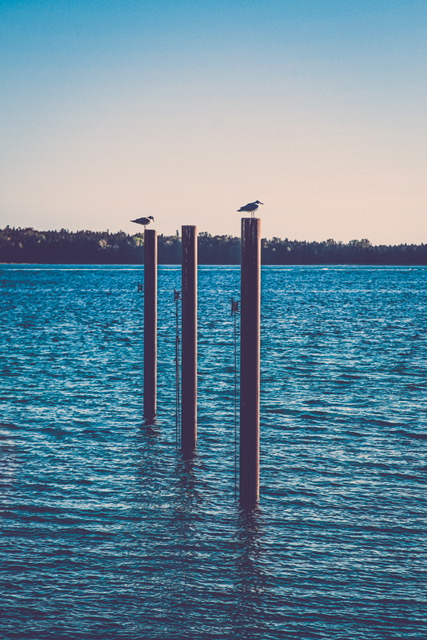 Birds on Dock Posts
