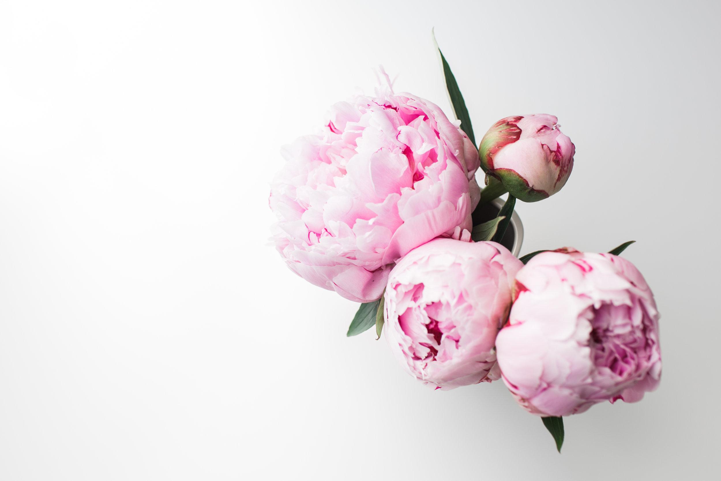 LG-PinkPeonies-01.jpg