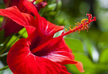 We are a full scale professional nursery, in the heart of South Kihei, servicing the community and offering a wide selection of plants to landscapers, home owners, hotels, shopping centers, small business owners, banks and offices around the island of Maui. -