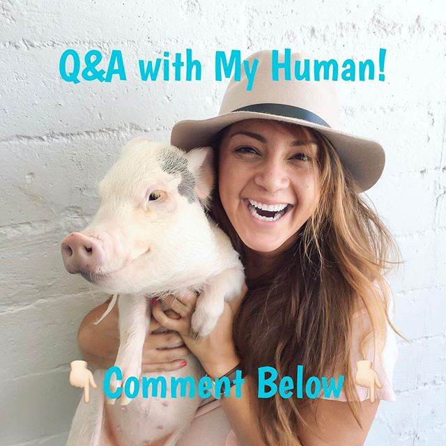 Hey Homies👋🏻 We have been asked by a lot of you to have a question and answer time with My Human. 👇🏻Comment below👇🏻with all your questions and my Human will post all the answers on Friday. Can't wait to hear all your questions!!!