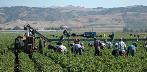 United Farmworkers (UFW) Wins Worker Protections