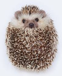 hedgehog4.jpg