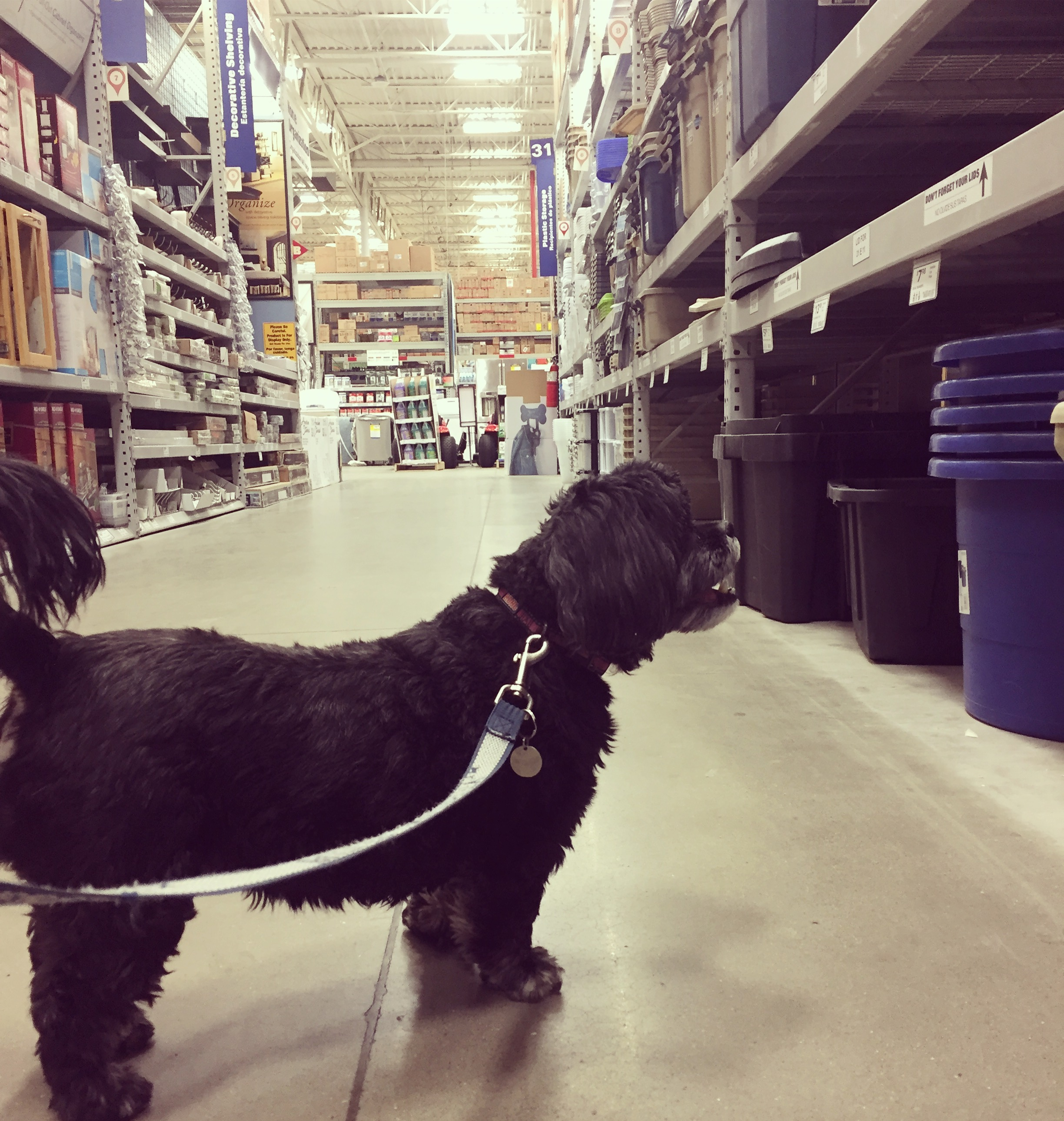 Contemplating home-organization options in one of our favorite aisles at Lowe's. Mylee knows good things get stored in plastic tubs.