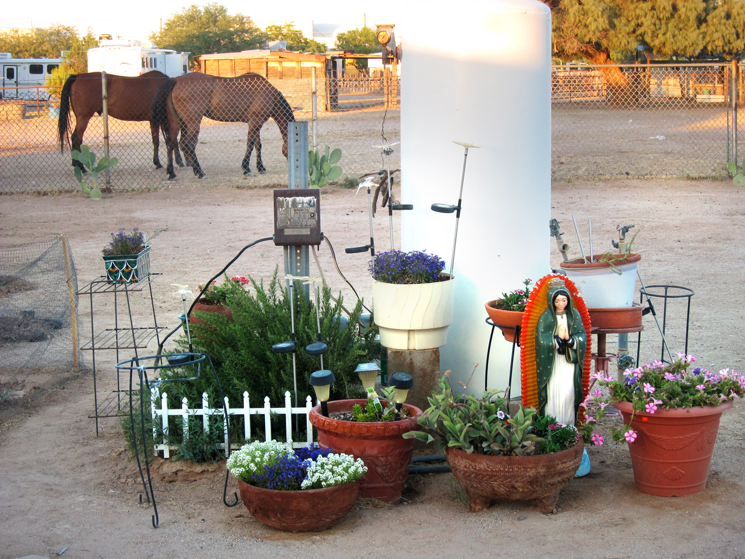 One of my favorite places in the world, my mother-in-law yard in South Tucson.