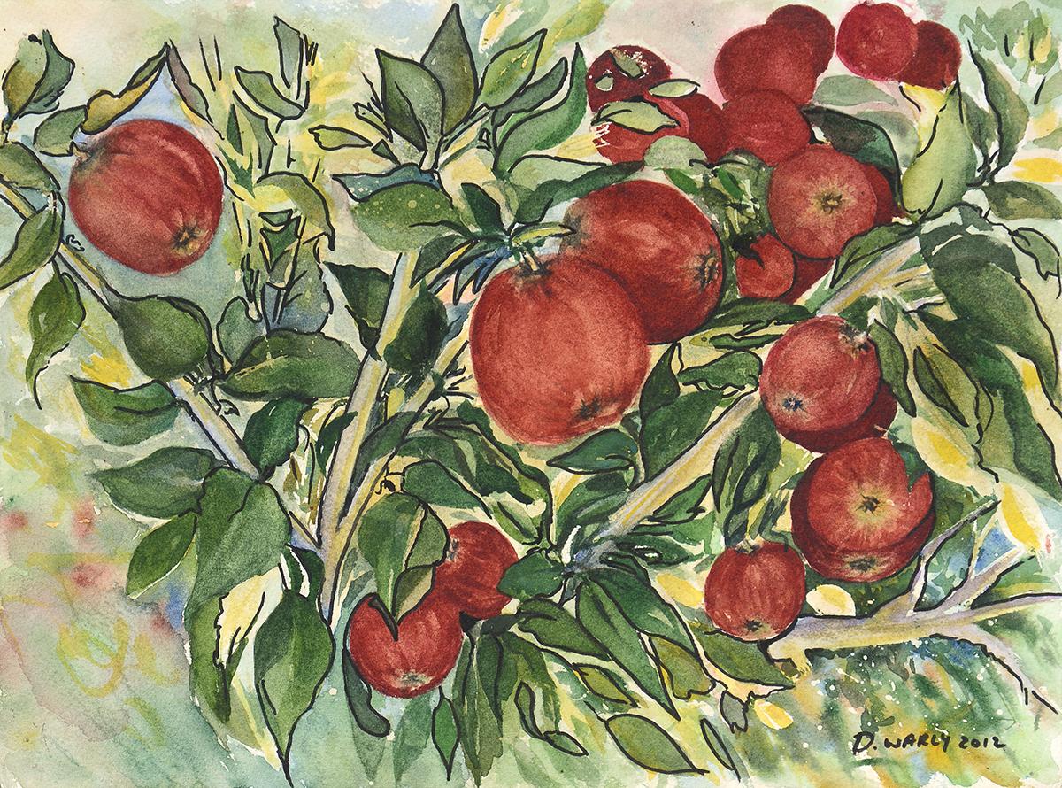 New Zealand Apple Orchard
