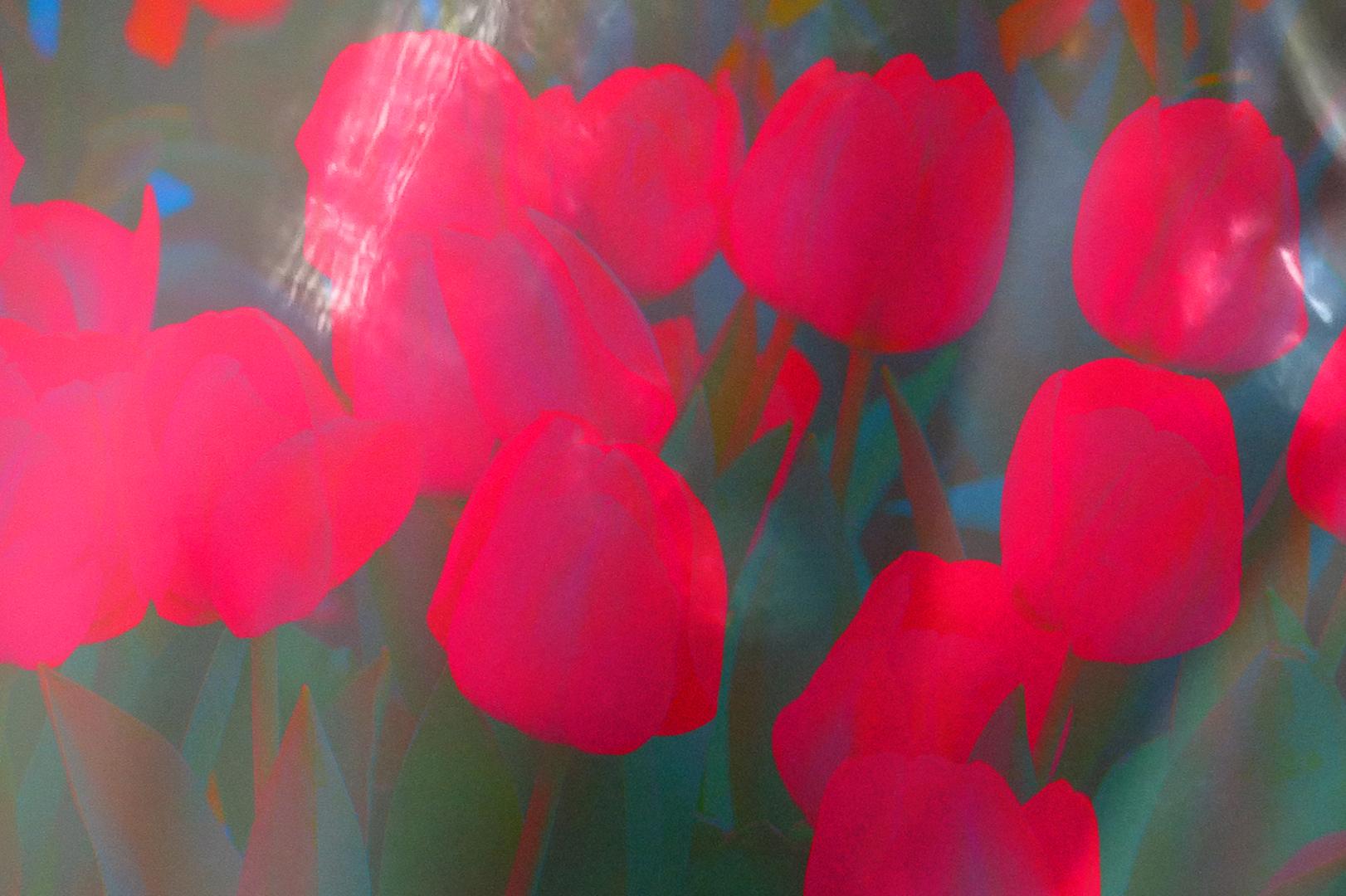 bright pink tulips luminosity blend.jpg