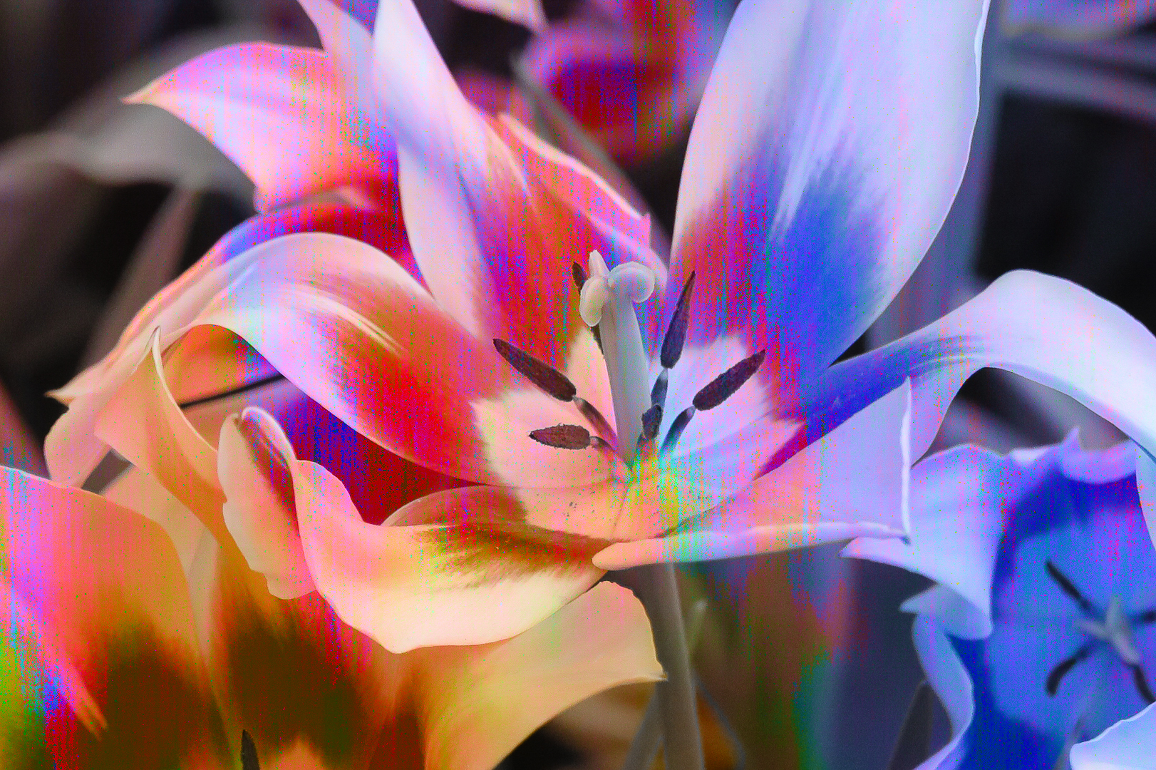 lilyblend-1.jpg