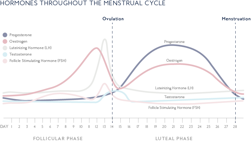 Hormones_Through_Menstrual_Cycle.png