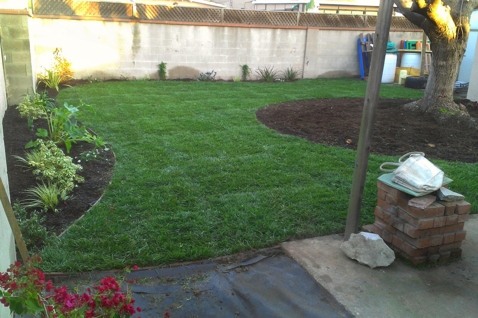 new_yard.jpg