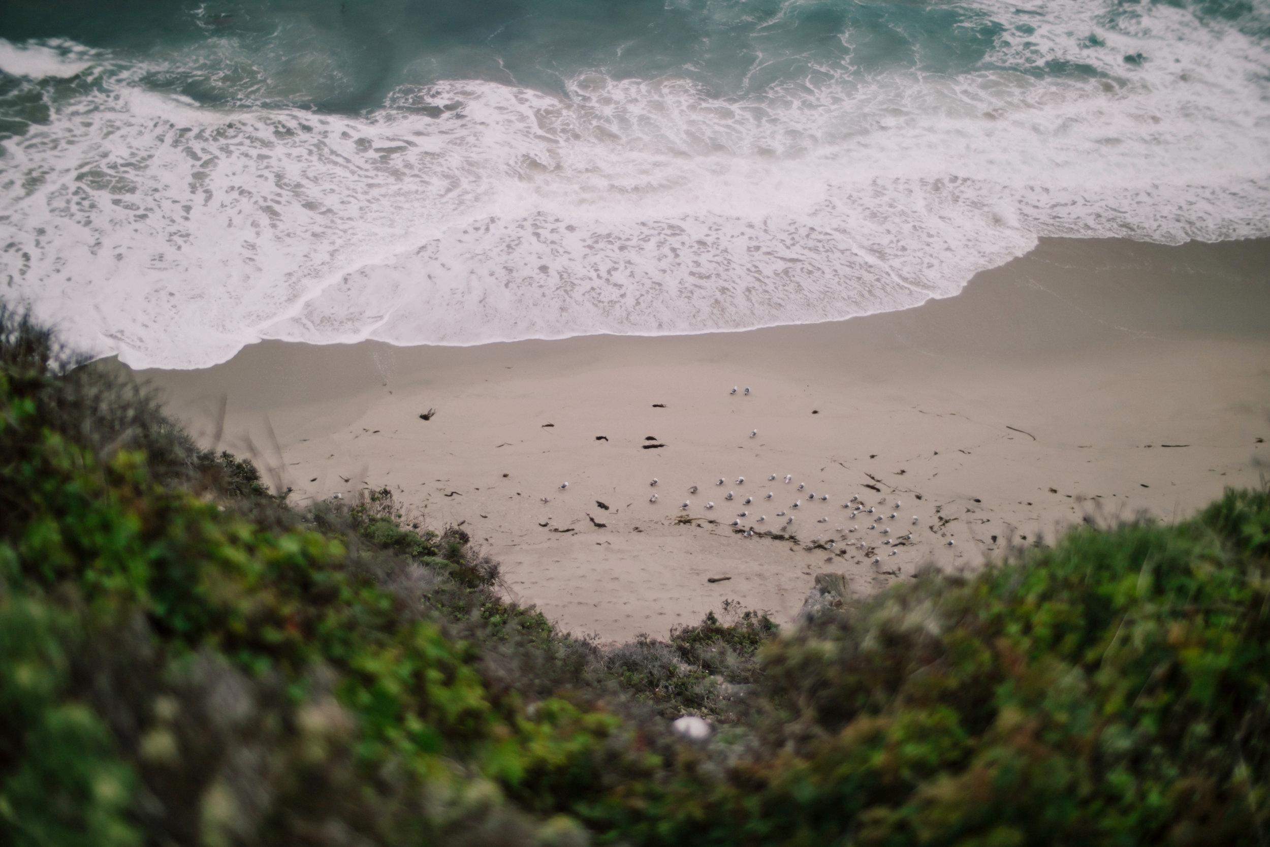 Big Sur Birds, 2017