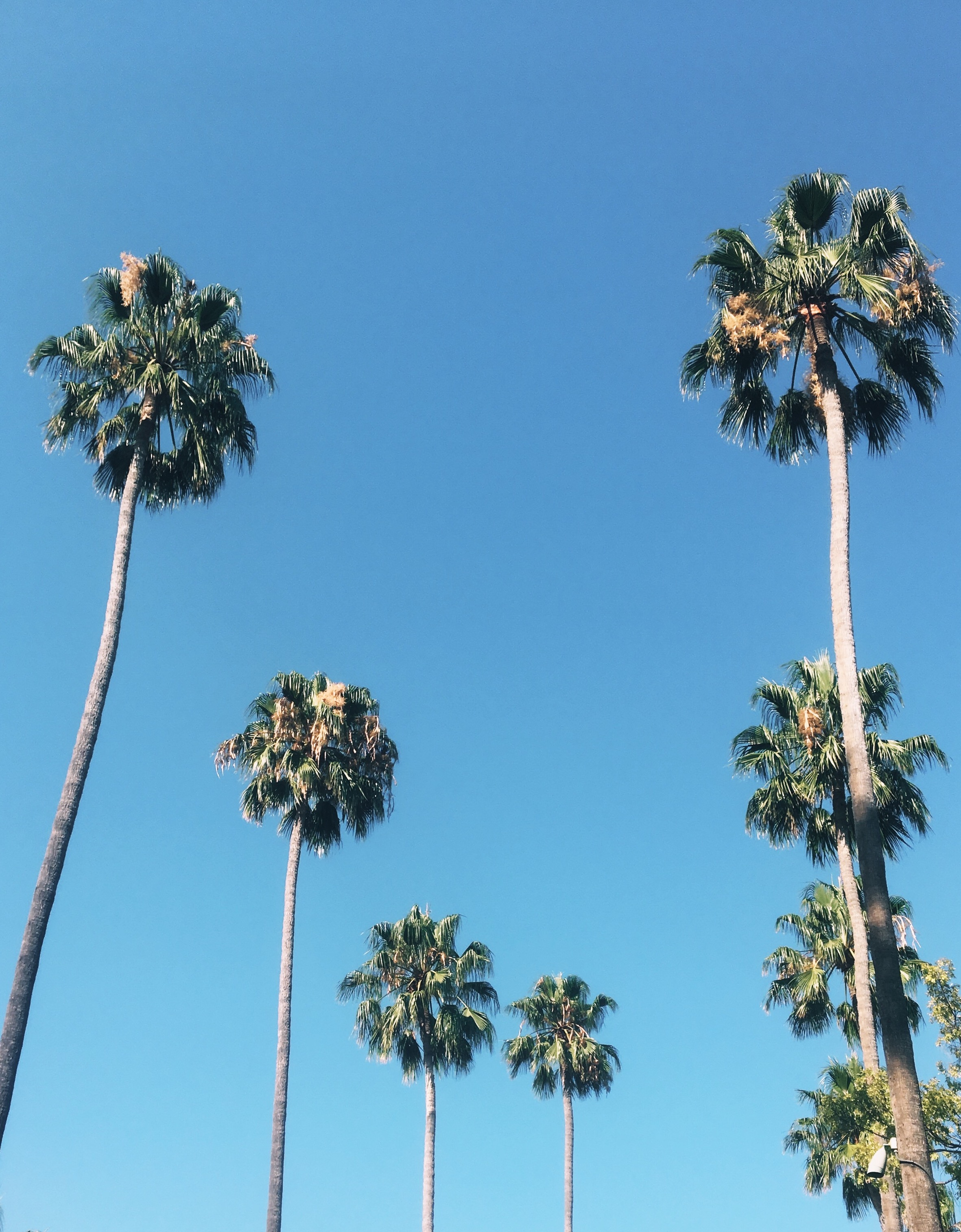 Palmeras - LA.jpg