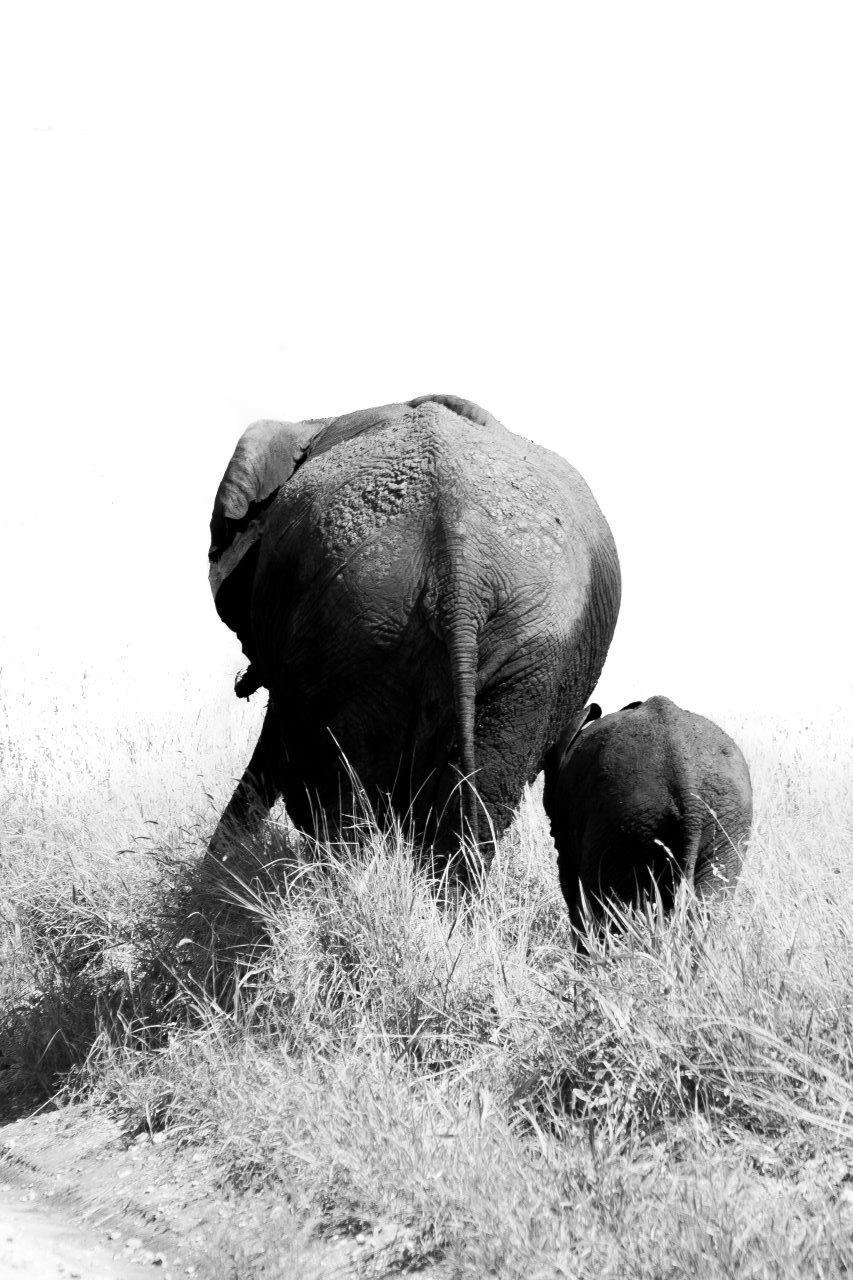 Mère éléphant et son petit de dos
