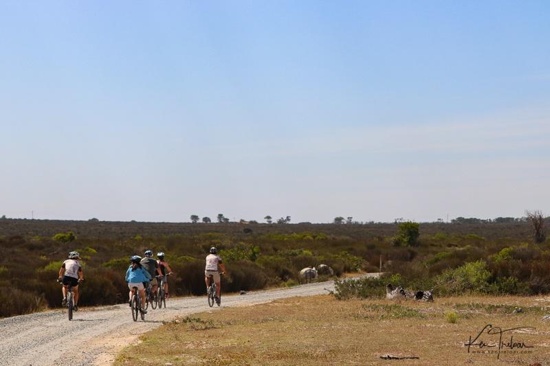 Bike & Saddle Cycle Safari - Buffesfontein - by Ken Treloar Photography - www.kentreloar (5).jpg