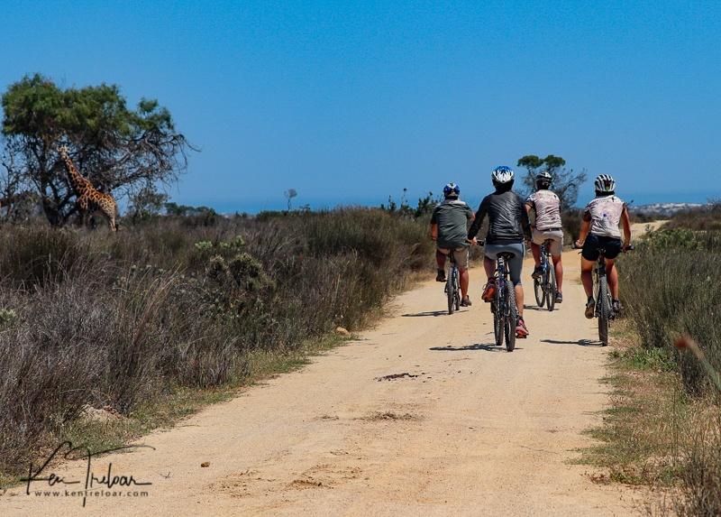 Bike & Saddle Cycle Safari - Buffesfontein - by Ken Treloar Photography - www.kentreloar (8).jpg