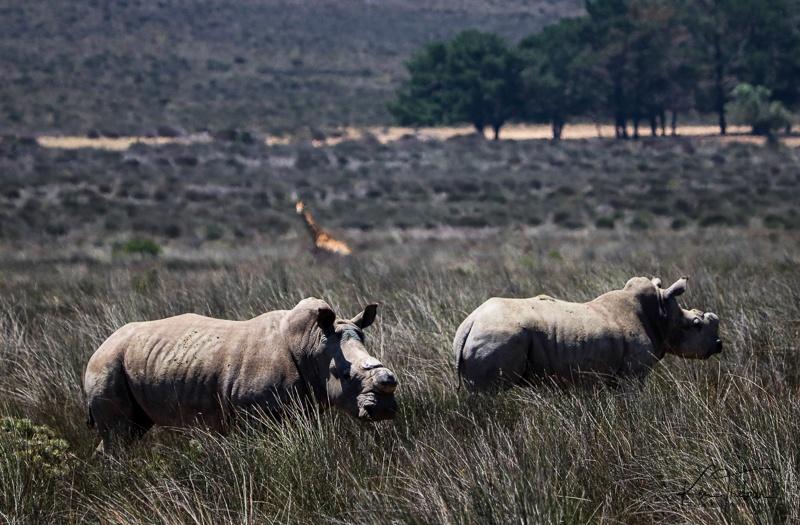 Bike & Saddle Cycle Safari - Buffesfontein - by Ken Treloar Photography - www.kentreloar (17).jpg