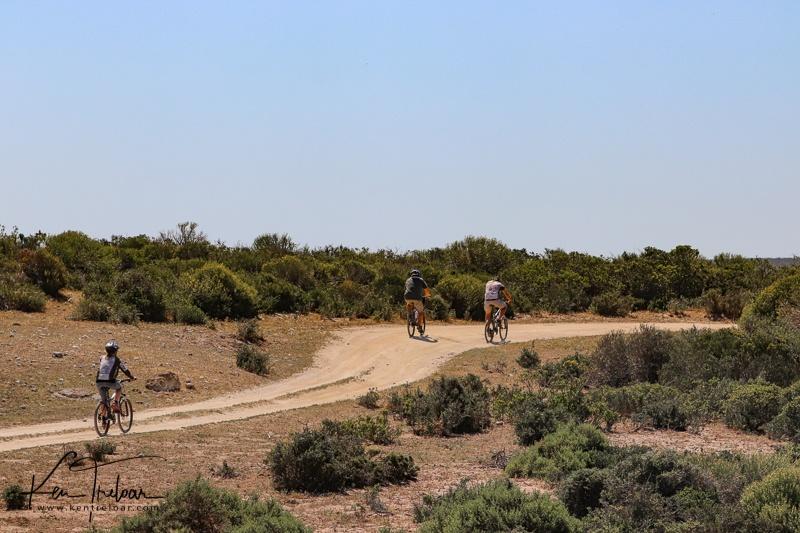 Bike & Saddle Cycle Safari - Buffesfontein - by Ken Treloar Photography - www.kentreloar (27).jpg