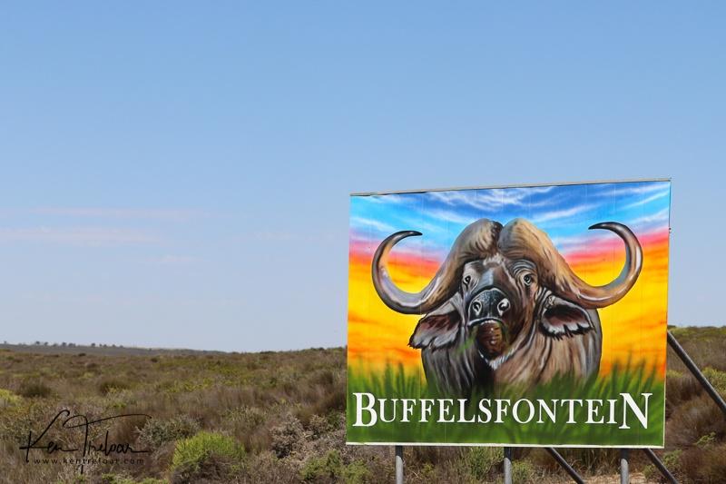 Bike & Saddle Cycle Safari - Buffesfontein - by Ken Treloar Photography - www.kentreloar (33).jpg