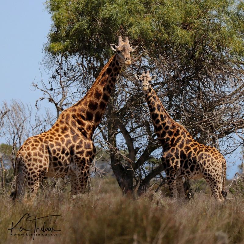 Bike & Saddle Cycle Safari - Buffesfontein - by Ken Treloar Photography - www.kentreloar (9).jpg