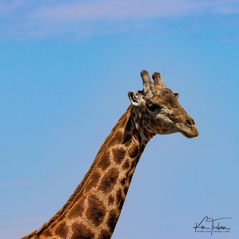Bike & Saddle Cycle Safari - Buffesfontein - by Ken Treloar Photography - www.kentreloar (11).jpg