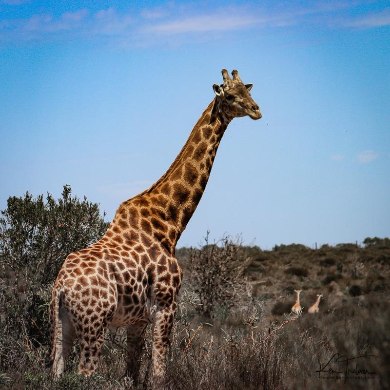 Bike & Saddle Cycle Safari - Buffesfontein - by Ken Treloar Photography - www.kentreloar (12).jpg