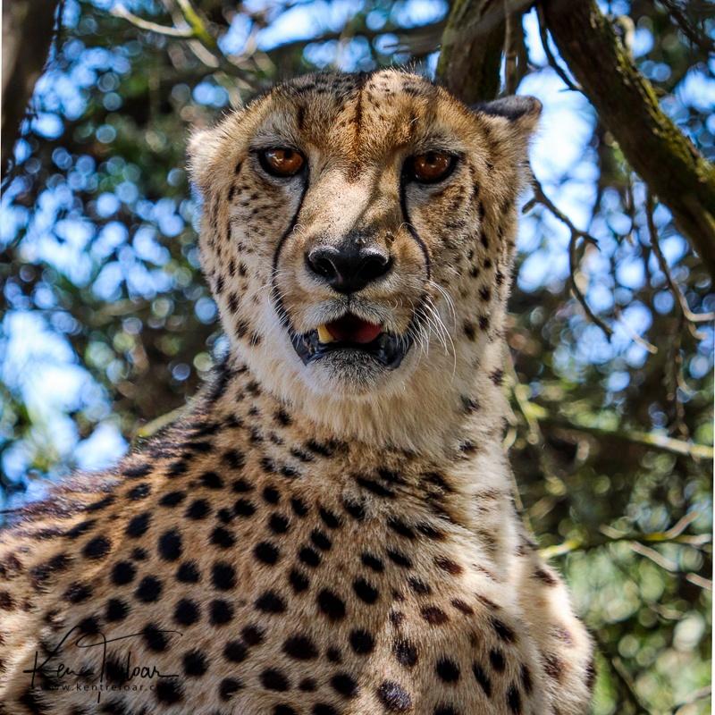 Bike & Saddle Cycle Safari - Buffesfontein - by Ken Treloar Photography - www.kentreloar (15).jpg