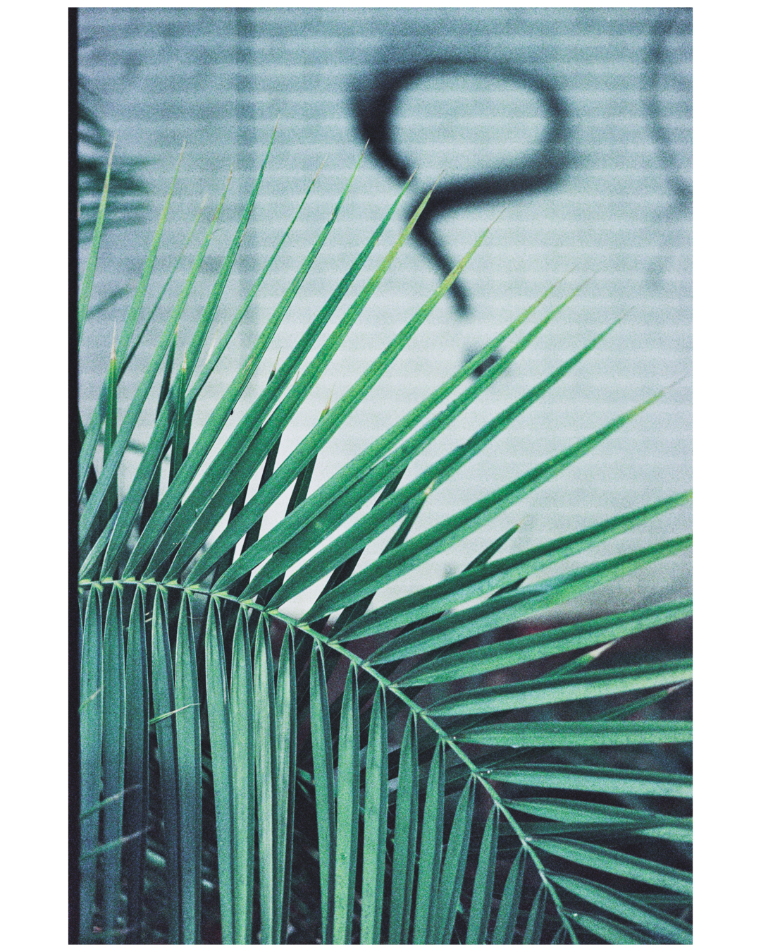 Film Photography Photo Walk 35mm - South Africa - by Ken Treloar Photography-3.jpg