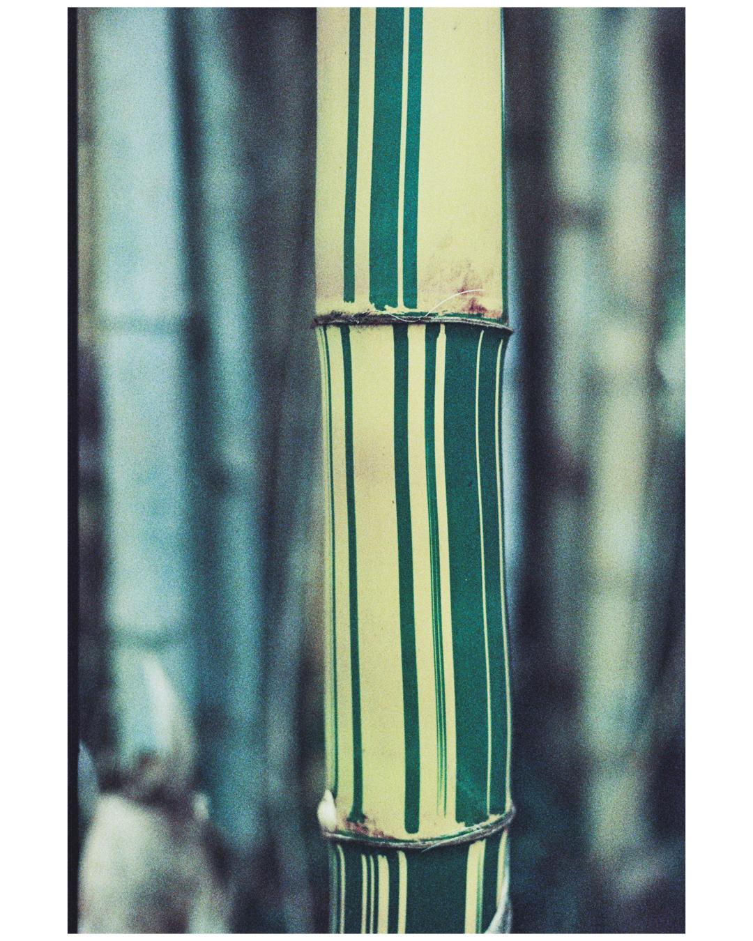 Film Photography Photo Walk 35mm - South Africa - by Ken Treloar Photography-5.jpg