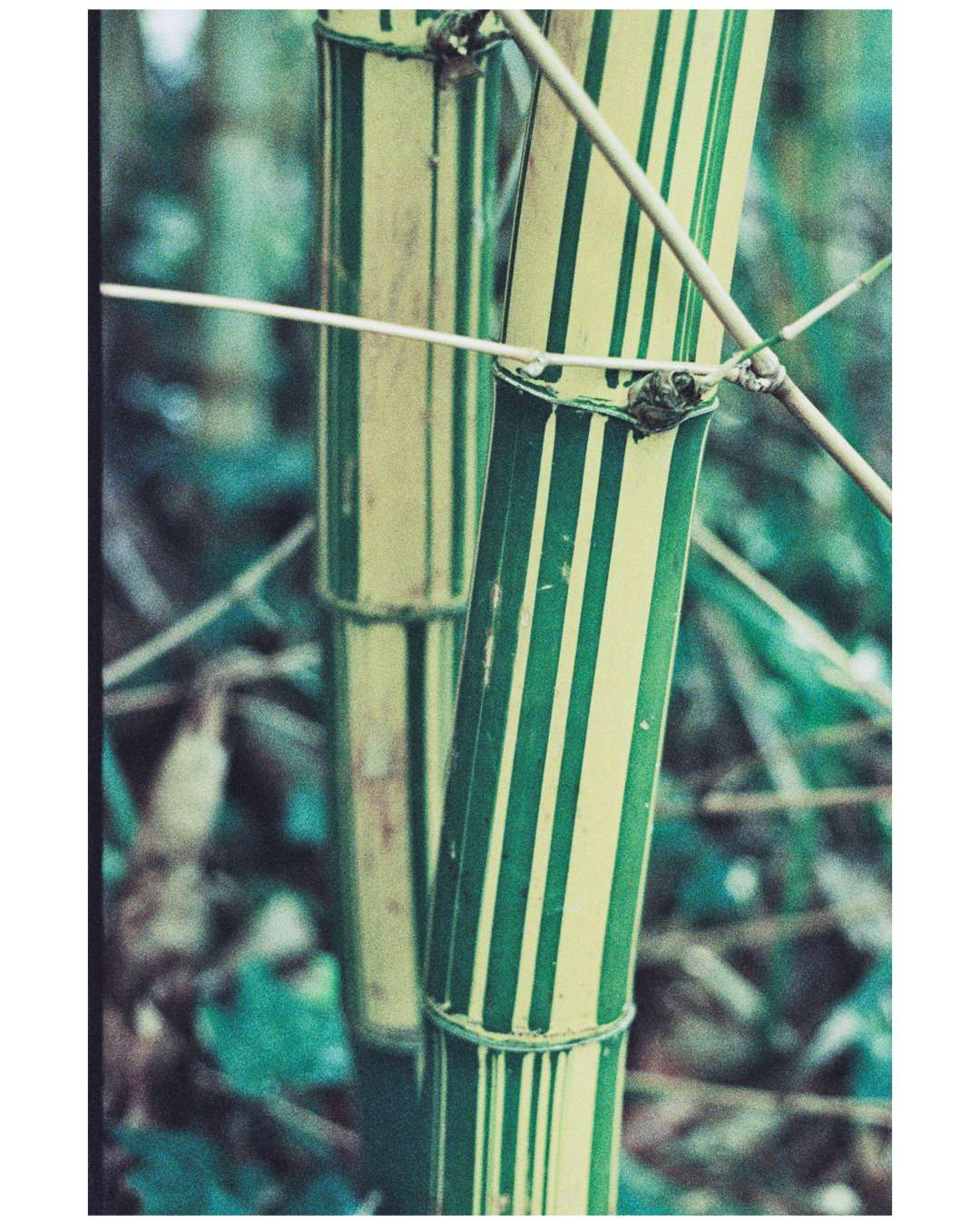 Film Photography Photo Walk 35mm - South Africa - by Ken Treloar Photography-6.jpg