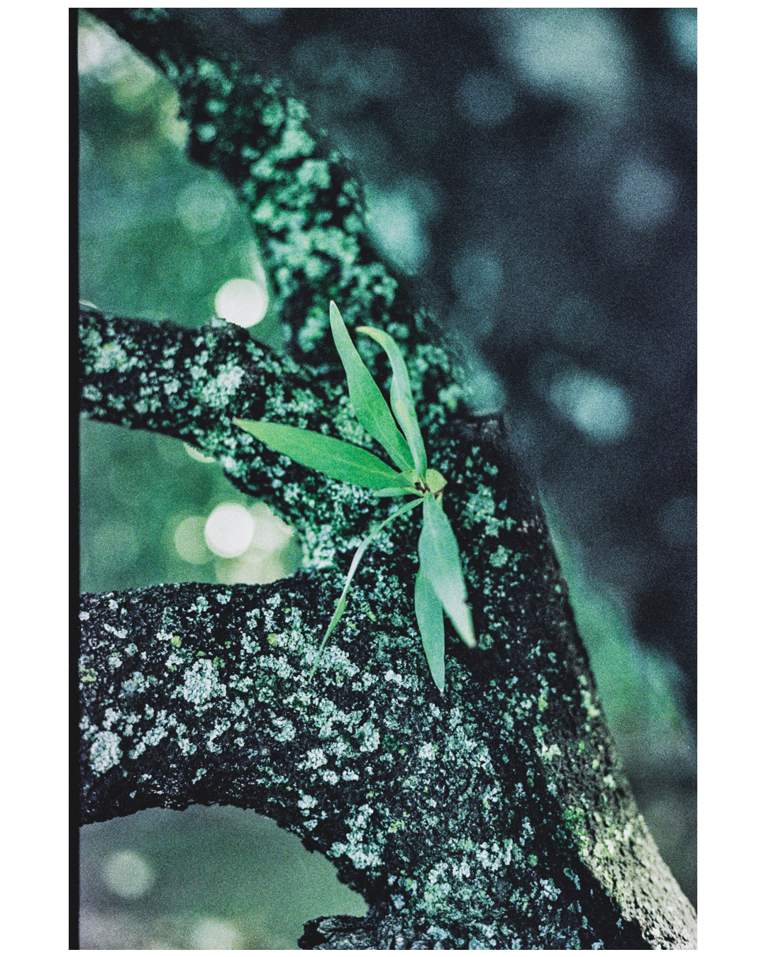Film Photography Photo Walk 35mm - South Africa - by Ken Treloar Photography-25.jpg