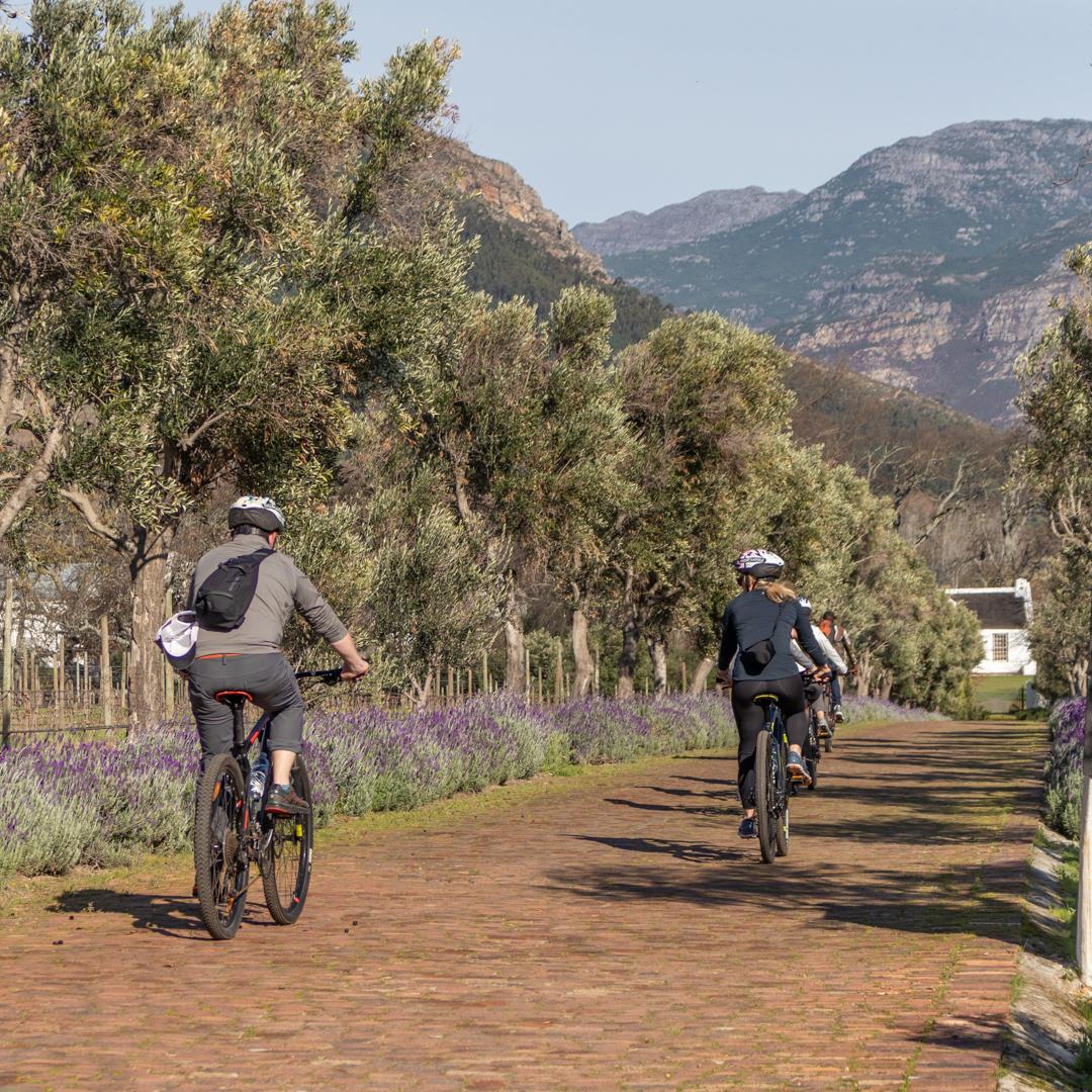LaBri Wine Tasting & Cycle - Franschhoek, 21 July 2018 South Africa - by Ken Treloar Photography-49.jpg
