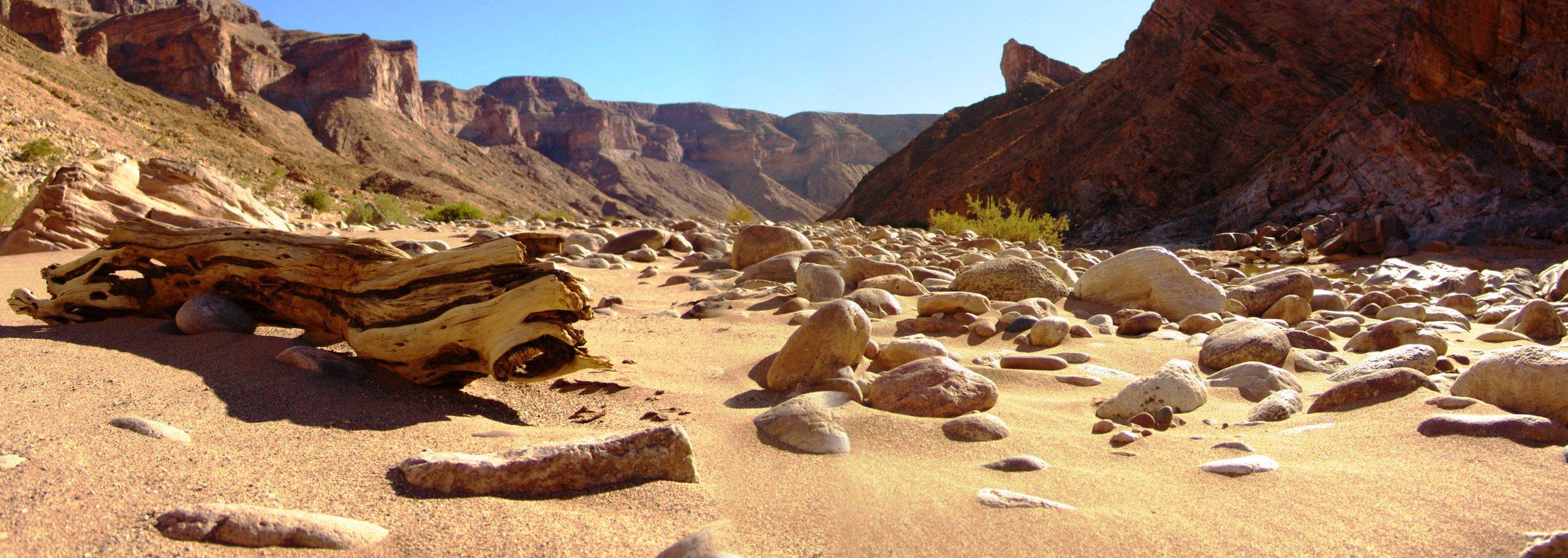 2008 - Sun-bleached log, Fish River Canyon, Namibia