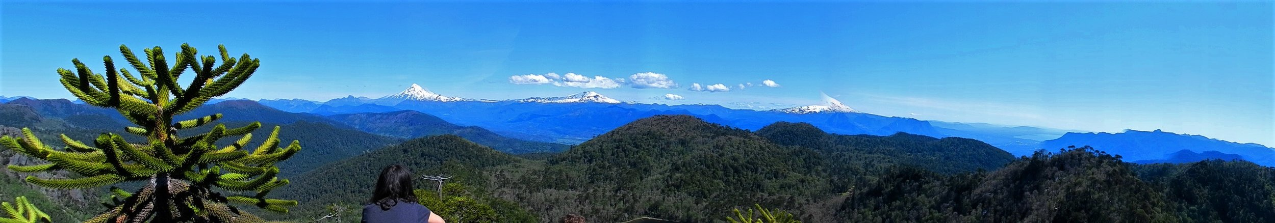 2012 - Mirador el Cani, with a view of 3 snow-capped volcanoes and an Araucaria forest, near Pucon, Chile