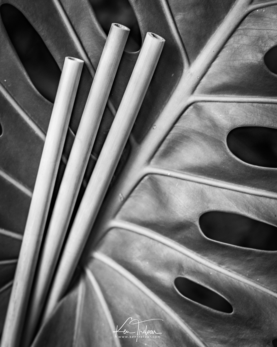 Khanyiso Reed Straws - Zero Plastic - Cape Town-13.jpg