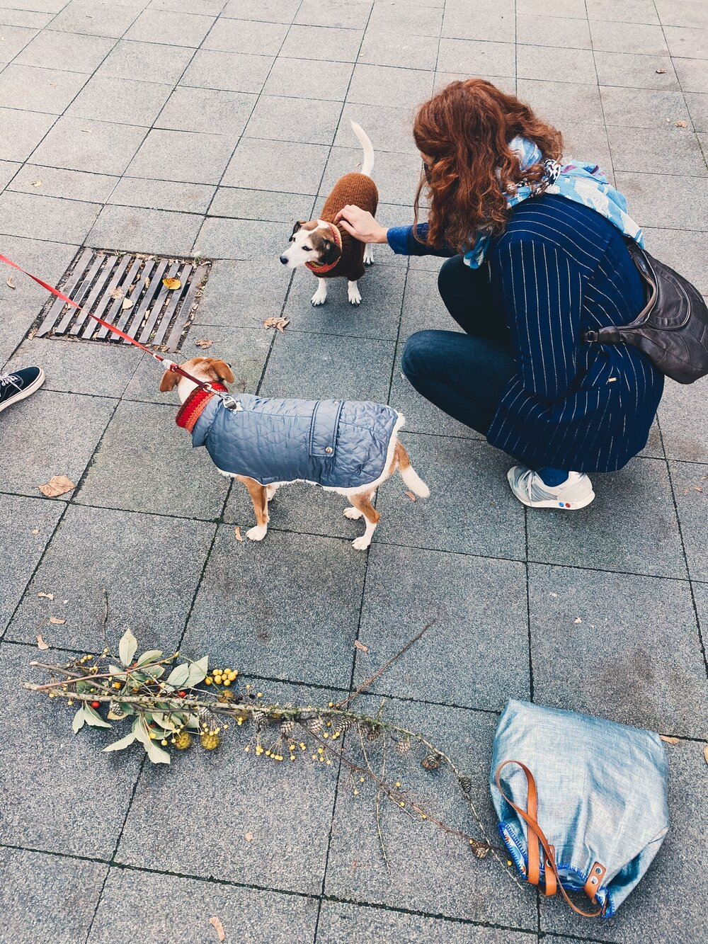 Meeting furry friends with stylish sweaters on