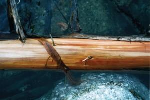 Cedar on Granite in Water