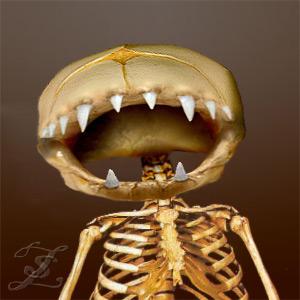 skeletal_zs.jpg