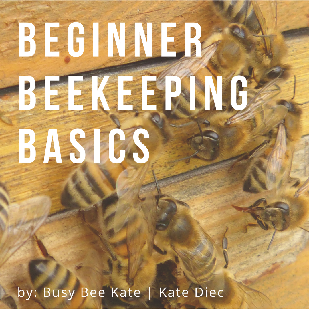 busy bee kate blog.png