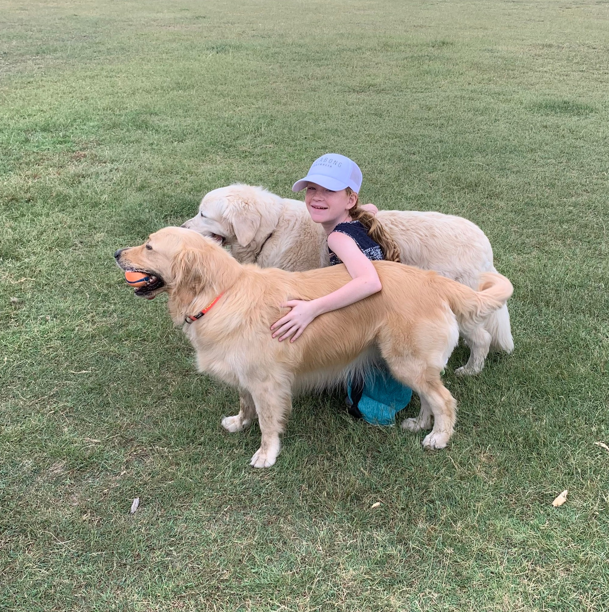 Sometimes you have to find some golden retrievers in the park because you miss yours!!