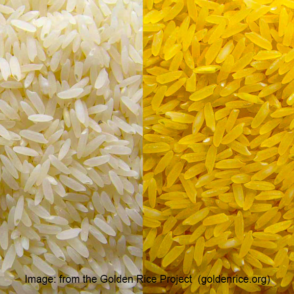Image from the Golden Rice Project (golden rice.org)