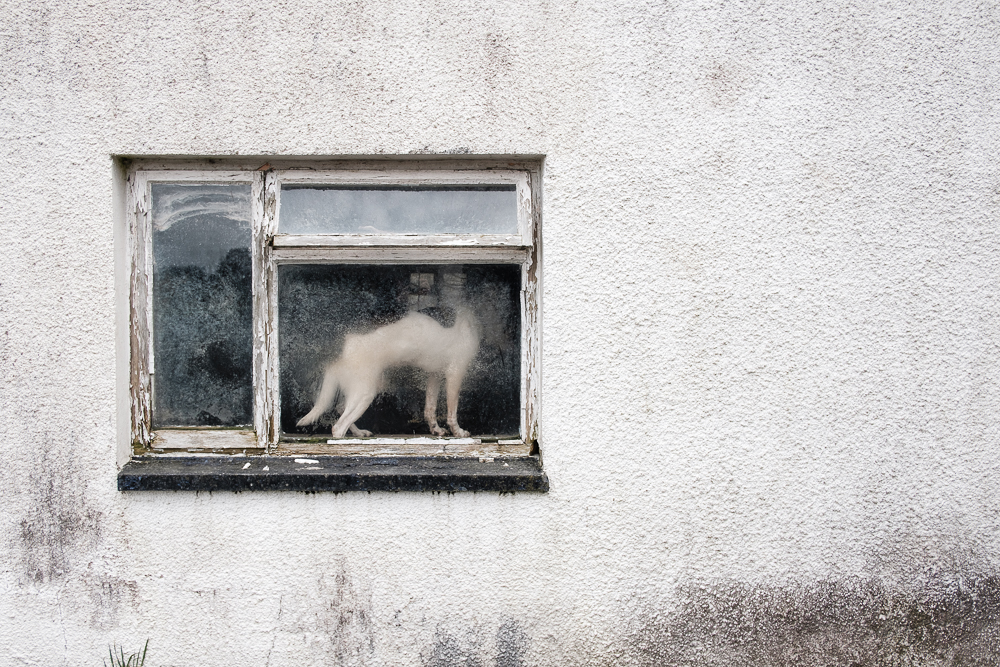 meidrim-dog-dirty-window.jpg