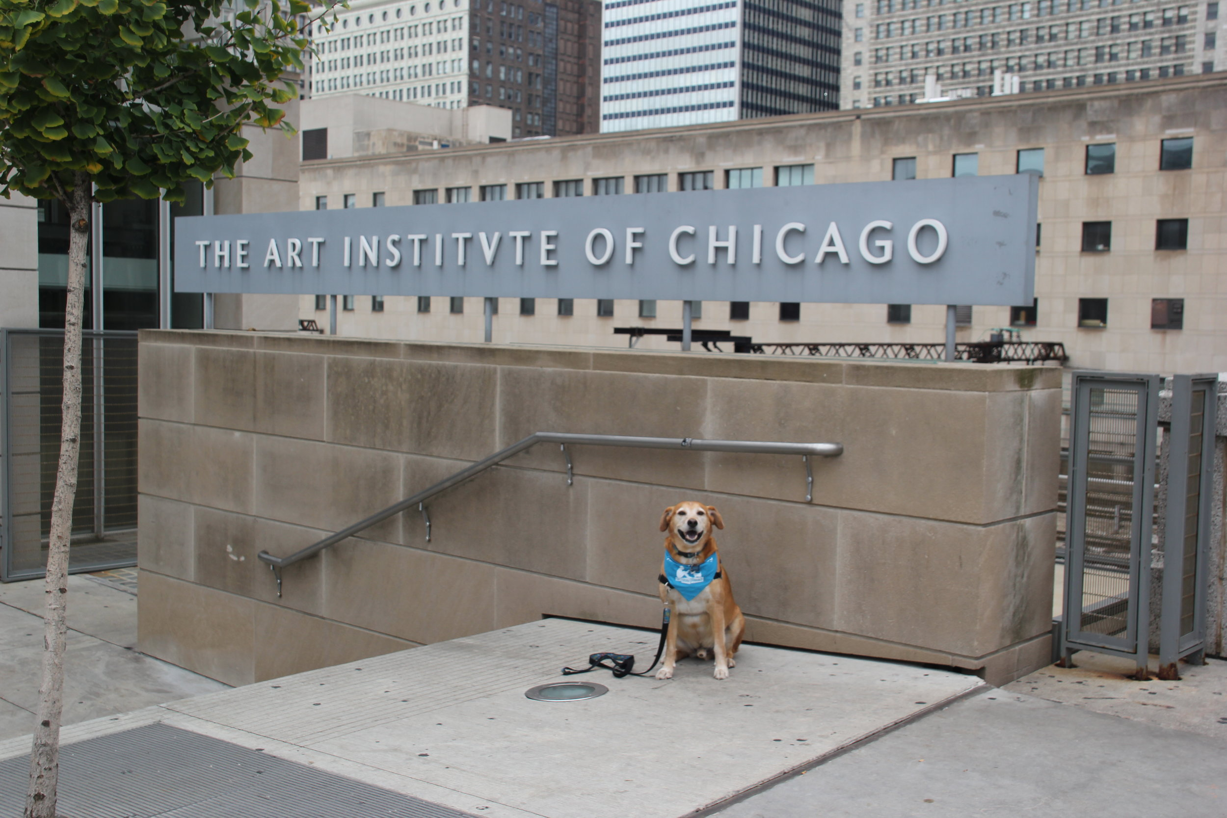 Certified Reading Assistance Dog Cosi Fan Tutte poses outside of the Art Institute of Chicago's Modern Wing entrance. Student stories created during this trip will serve as the inspiration for the next Cozy adventure! (M. OBrien)