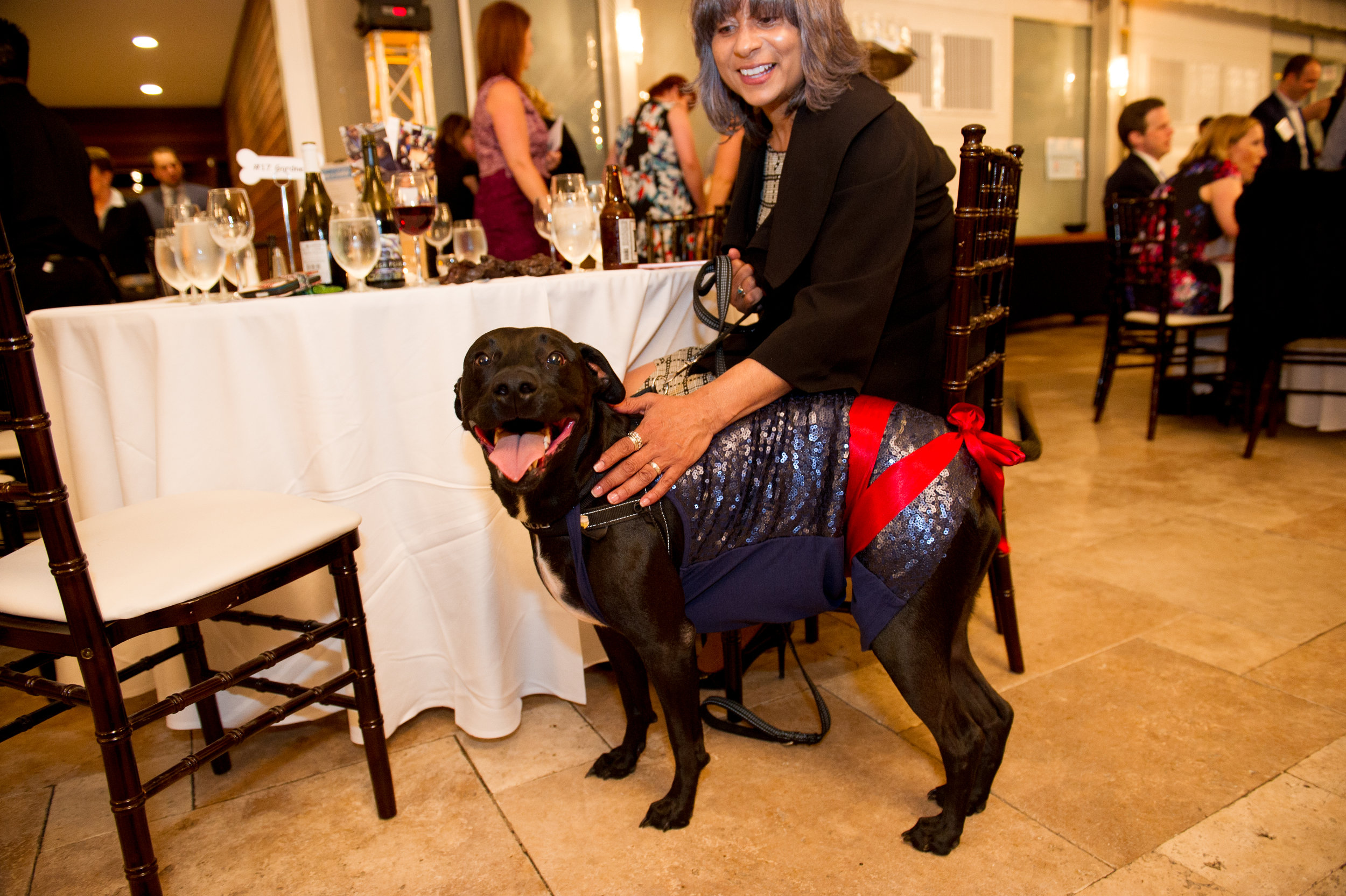 SSR Bark N Ball 2017 (89 of 219).jpg