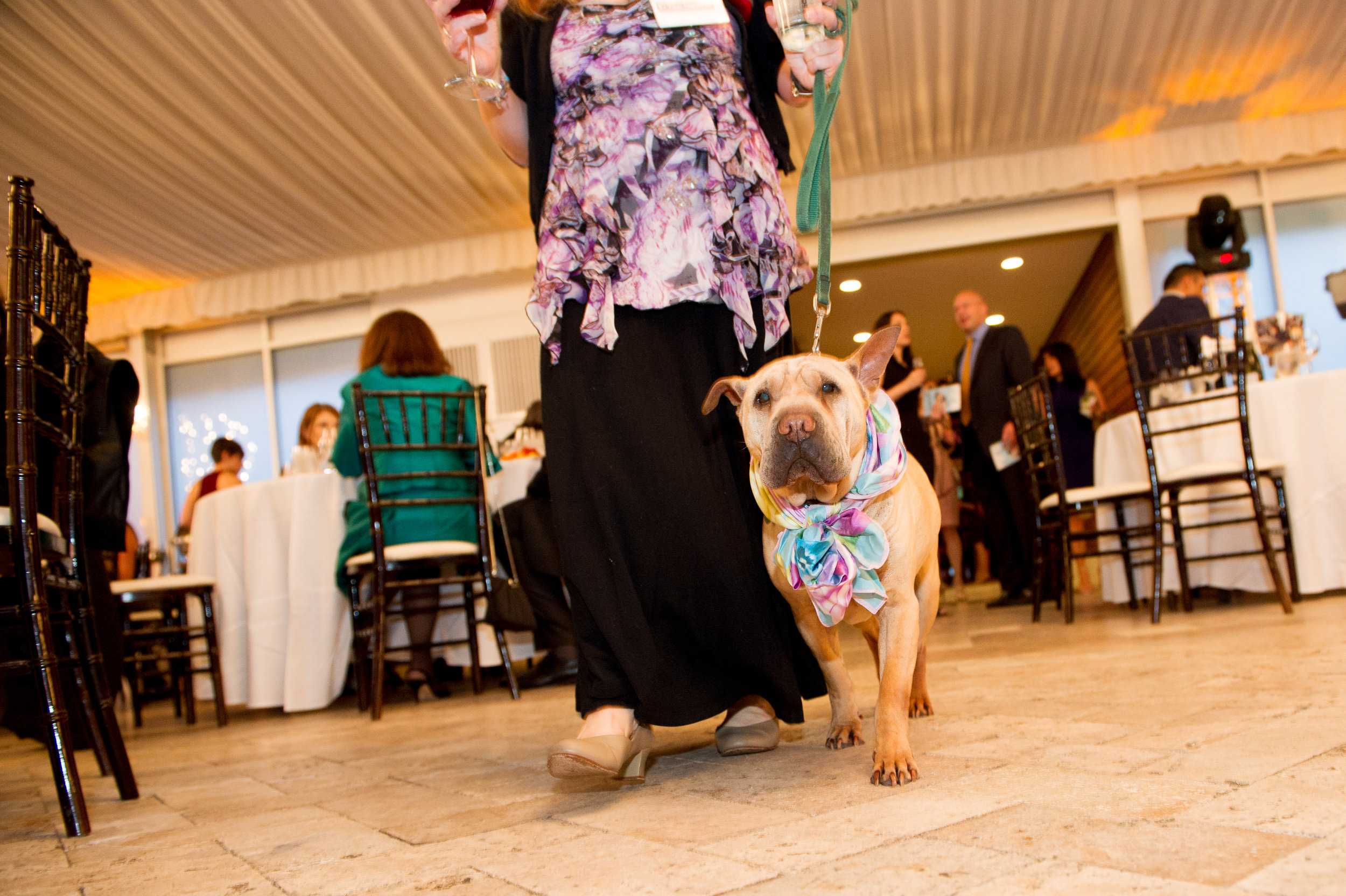 SSR Bark N Ball 2017 (66 of 219).jpg