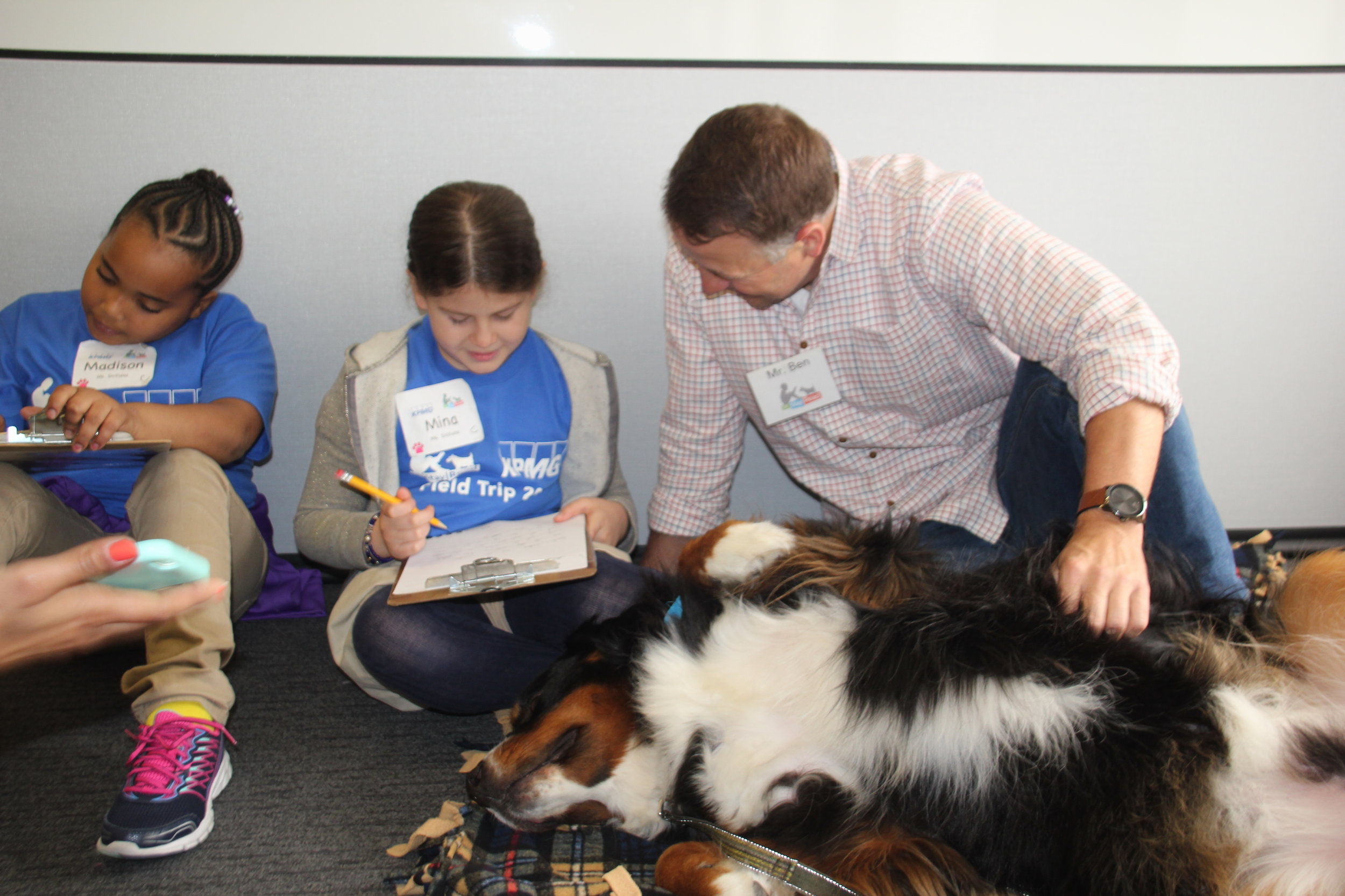 Certified Reading Assistance Dog Hank begs for belly rubs while second grade students work on writing their stories during a field trip to the KPMG offices.